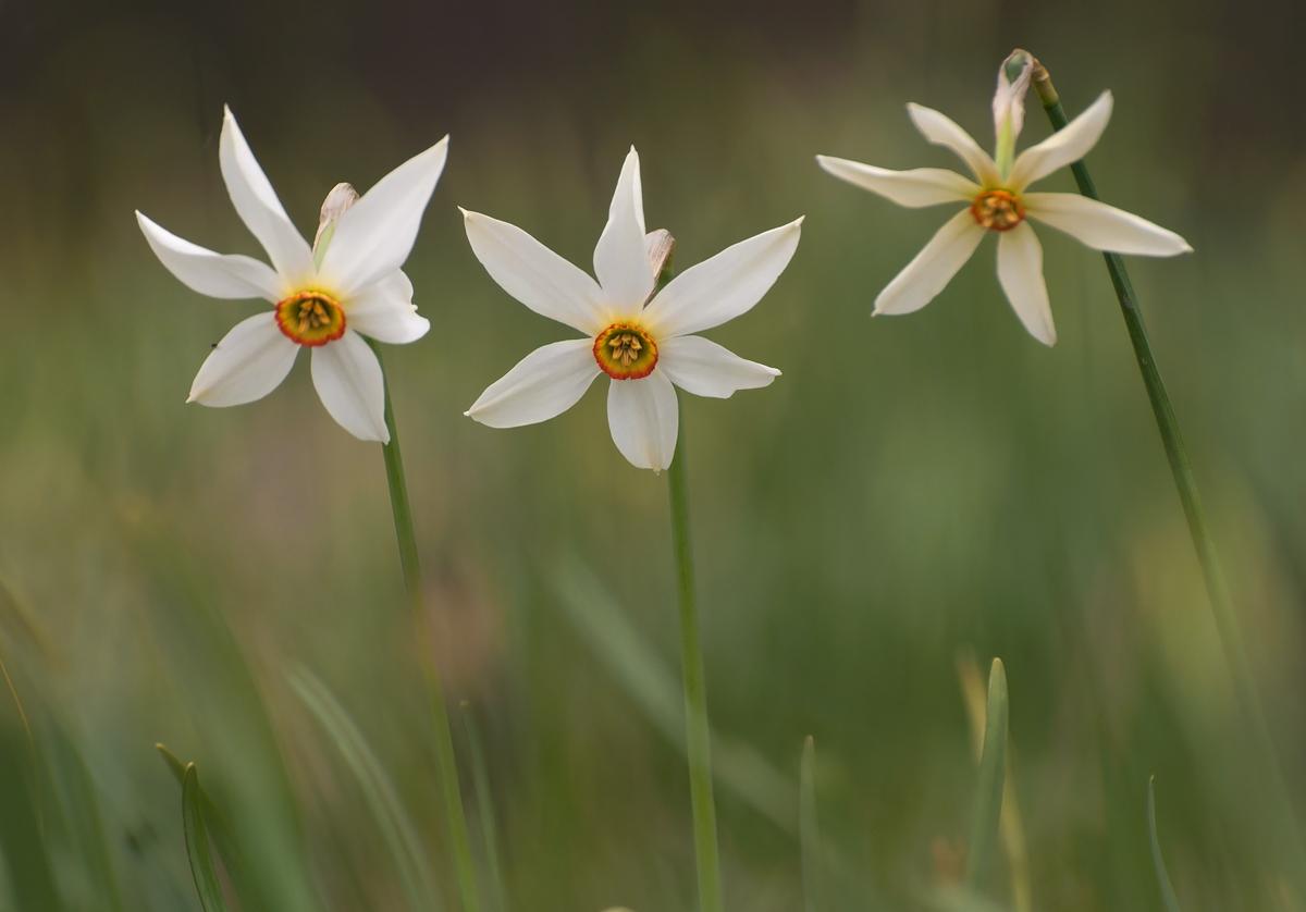 Fantastic Spring Season inTransylvania