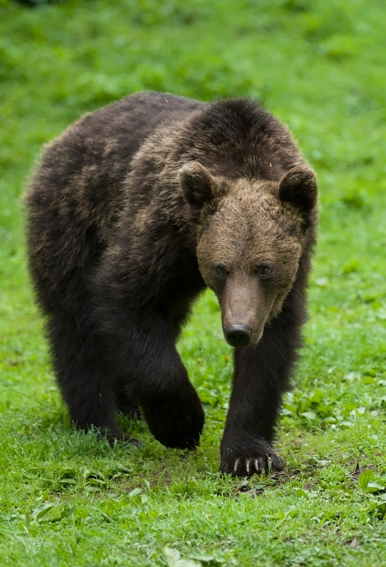 odd looking male Bear