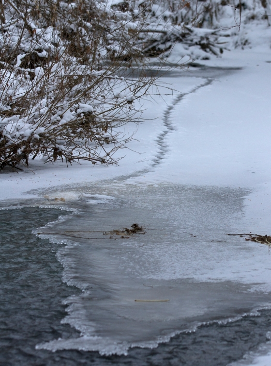 winter-river-with-otter-prints